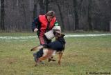 Oskar z Kadaňského podhradí VT1,BOJ nejkrásnější mladý pes,dnes využíván v chovu v USA